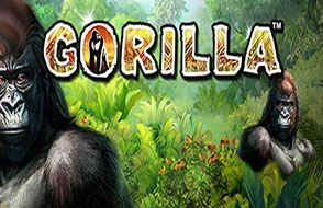 slot igra gorilla mir dgungley ot greentube 15754628651458 image